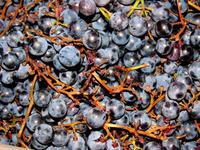 Виноградный джем из Изабеллы