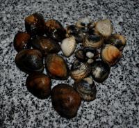 Ракушки-моллюски (ameijoas, berbigão)  в белом вине