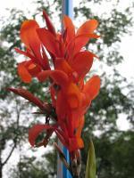 Первый осенний цветок :)