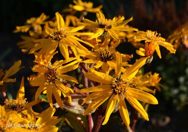 Осеннее солнце в Ботаническом саду