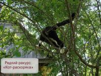 Кот-раскоряка