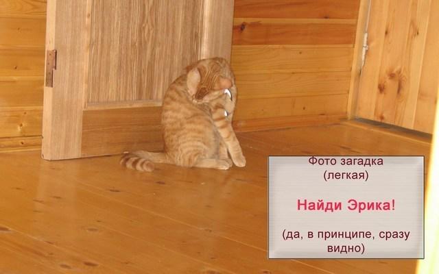 Найди кота, а?