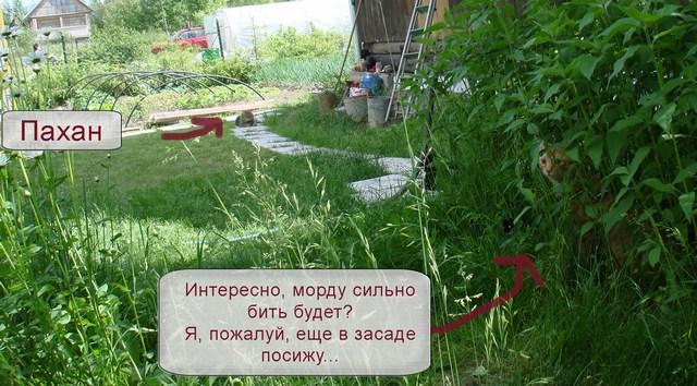 Думы солдата в засаде