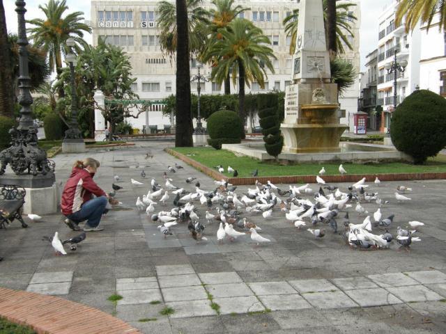 Испания, Херес. Голуби.