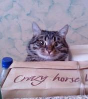 Crazy horse,чё ещё сказать :D
