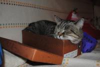 Кому что, а коту - Масленица :)