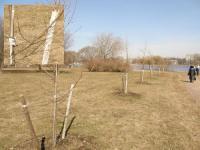 Выращиваем деревья