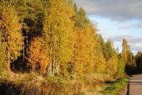 Ну ооочень золотая осень :)