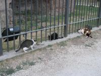 Римские кошки.