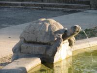 Фонтан. Черепаха.