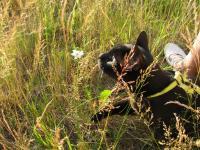 За ромашкой тоже интересно охотиться :)