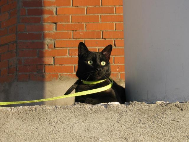 Серьезный и опасный кот :)