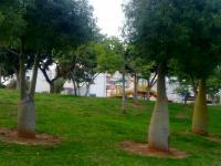 смешные деревья