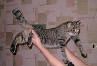 Полметра Кошки... и хвост!