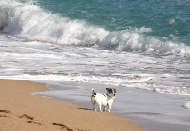 Испания. Calella. Пляж. Сябака!