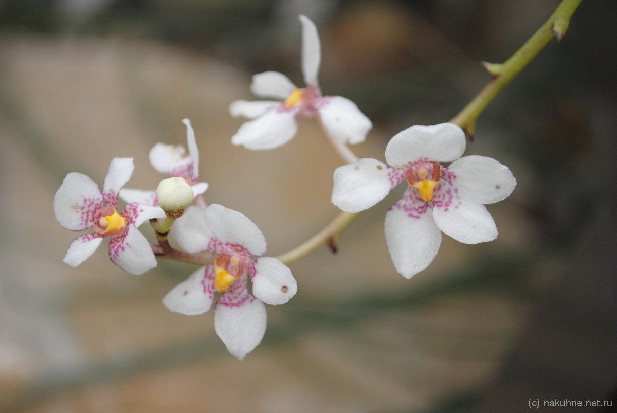 Нежные такие орхидеи