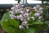 Вот не уверена, что орхидеи, но тоже цвели )