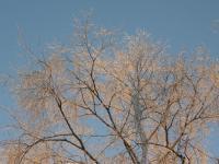 Кириллов. Зима...