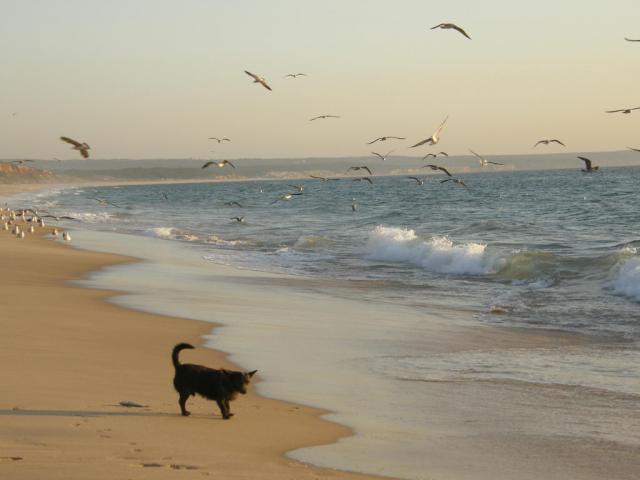 Португалия, Атлантика. Ся-ба-ка на страже улова.