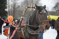Портрет лошадки