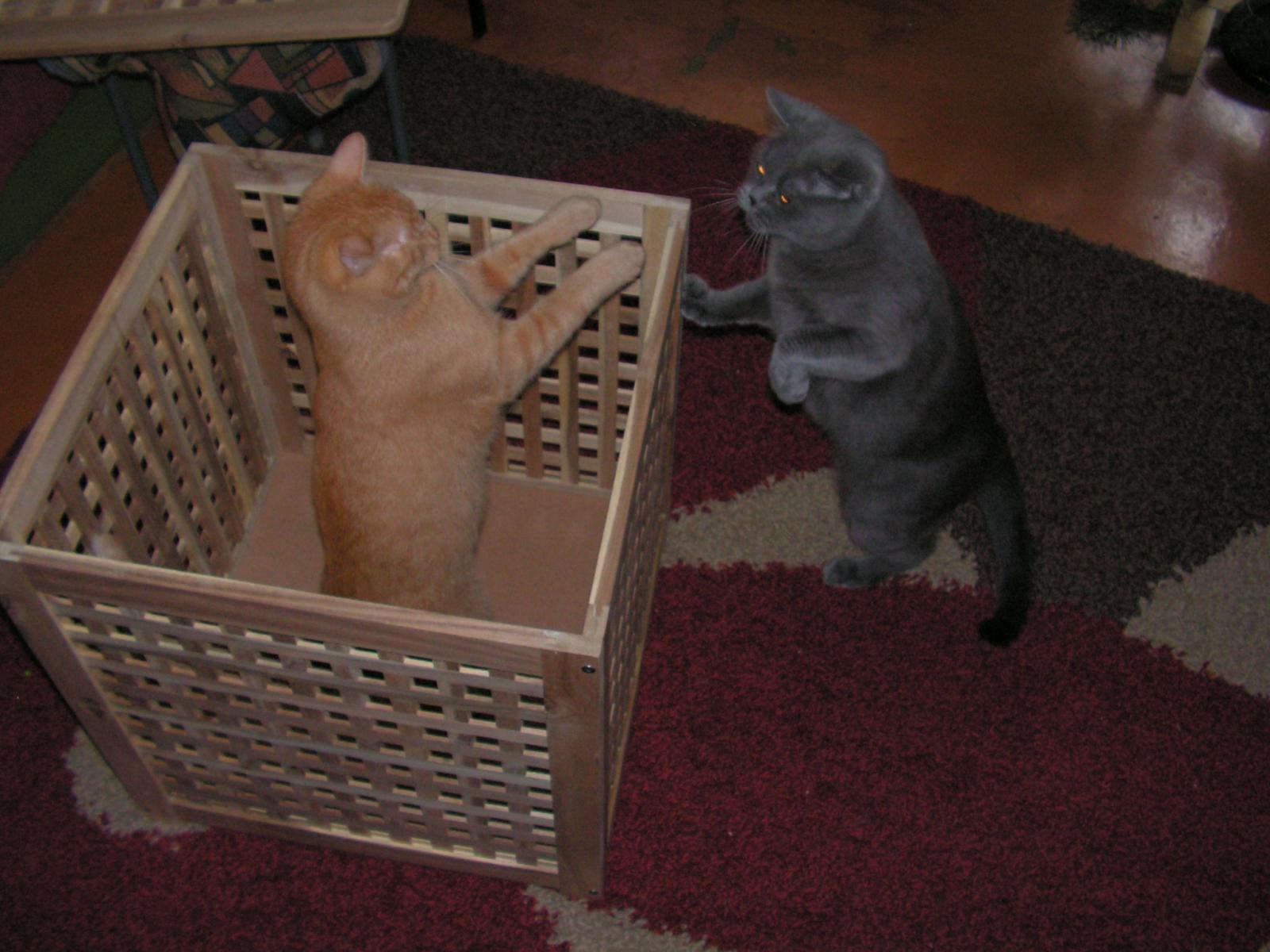 Кошачьи игры