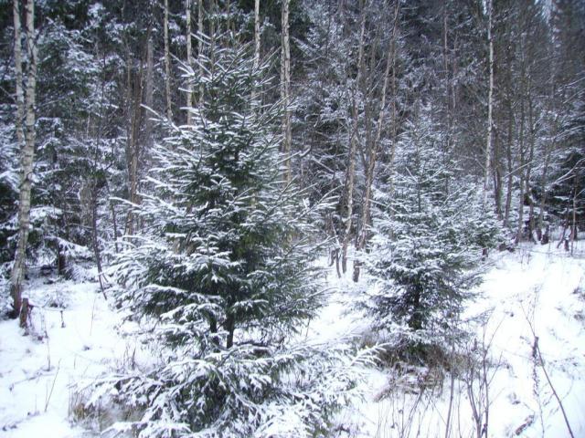 Подмосковье. 30 декабря 2006. Снег!!! :)