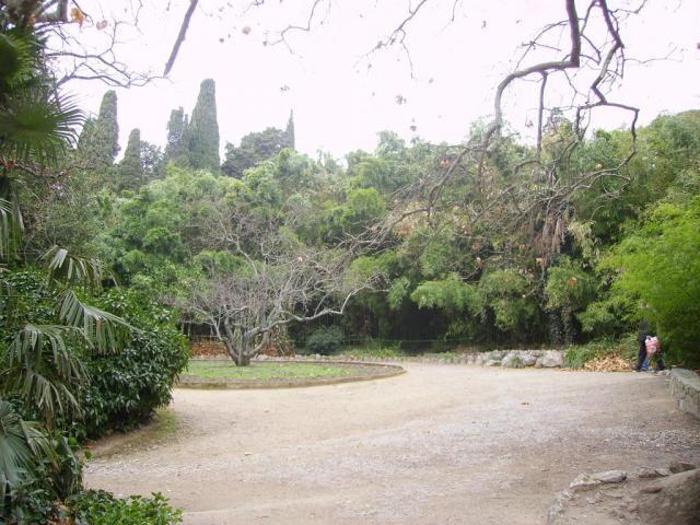 Крым. Никитский ботанический сад. 2 января 2007